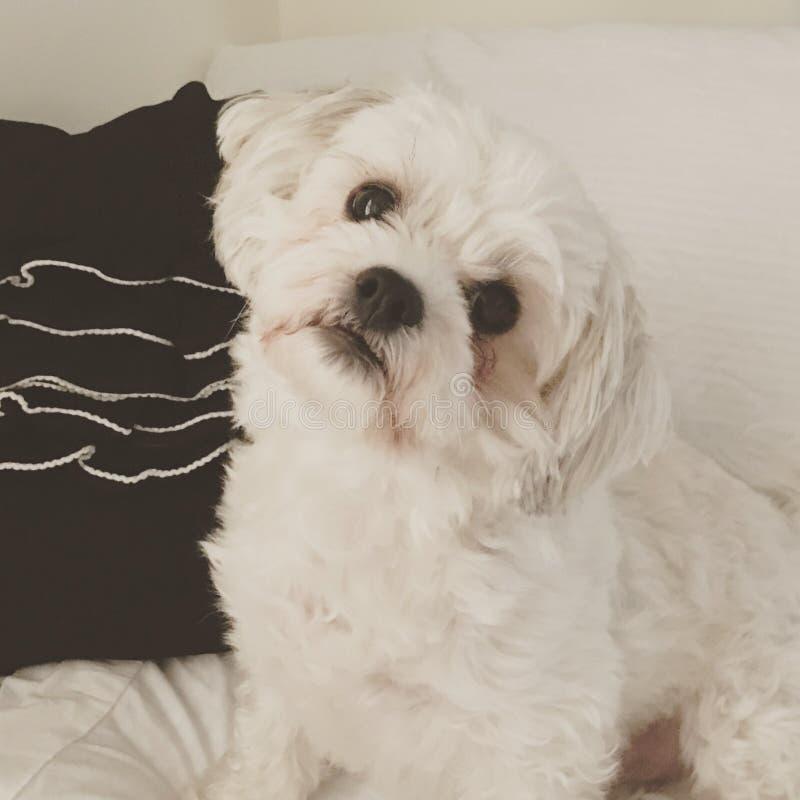 Οικογενειακό σκυλί στοκ φωτογραφία με δικαίωμα ελεύθερης χρήσης