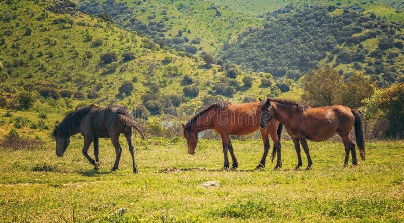 οικογενειακό foal άλογα λίγο λιβάδι στοκ εικόνες