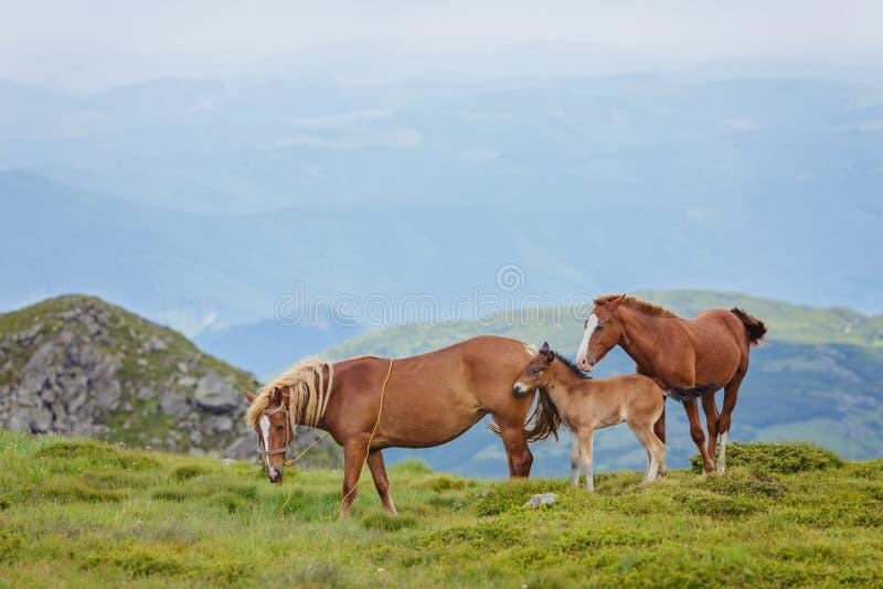 οικογενειακό foal άλογα λίγο λιβάδι στοκ φωτογραφία με δικαίωμα ελεύθερης χρήσης