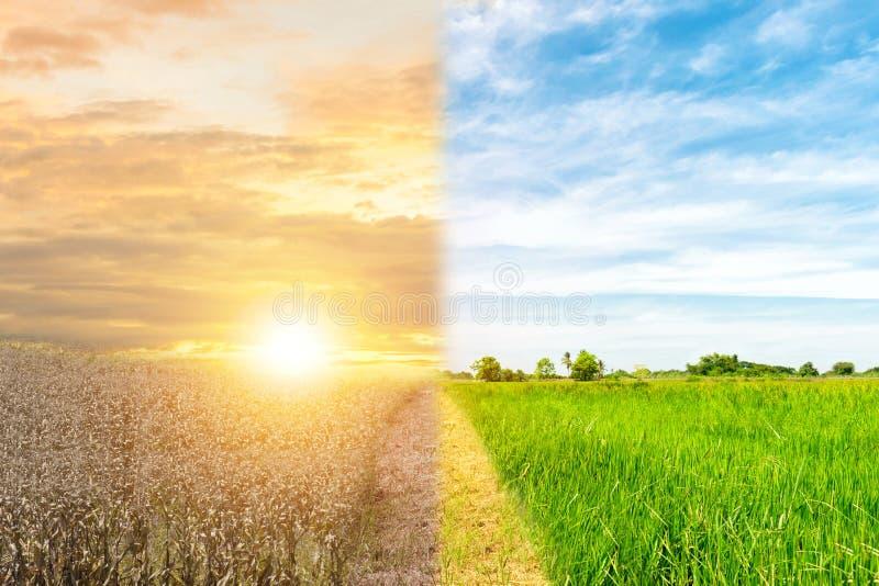 Οικολογίας έννοιας περιβάλλοντος αλλαγής ξηρασία και δάσος δέντρων δασική στοκ εικόνες