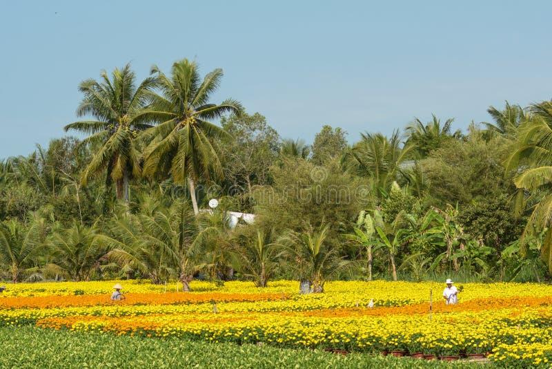 Οι άνθρωποι εργάζονται στους τομείς λουλουδιών Mekong του δέλτα, νότιο Βιετνάμ στοκ φωτογραφία με δικαίωμα ελεύθερης χρήσης