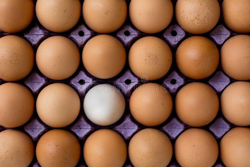 Οι άνθρωποι προτιμούν τα χρωματισμένα αυγά αντί του λευκού στοκ φωτογραφία με δικαίωμα ελεύθερης χρήσης