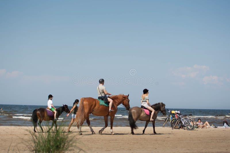 Οι άνθρωποι στα άλογα στην παραλία περπατούν τη θερινή ημέρα στοκ φωτογραφία