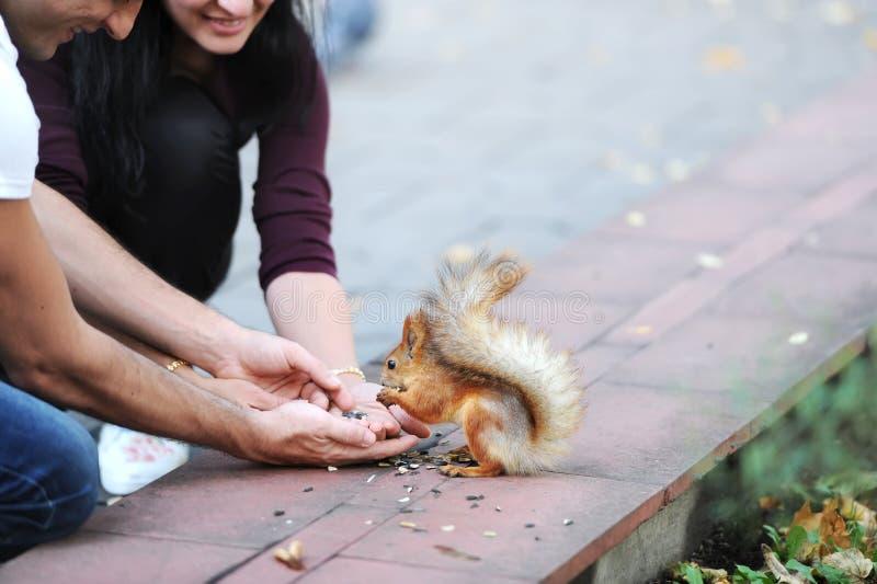 Οι άνθρωποι ταΐζουν έναν σκίουρο με τα καρύδια στοκ φωτογραφία
