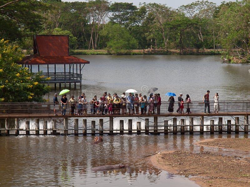 Οι άνθρωποι ταΐζουν τα hippos, ανοικτός ζωολογικός κήπος Khao Kheow στοκ φωτογραφίες