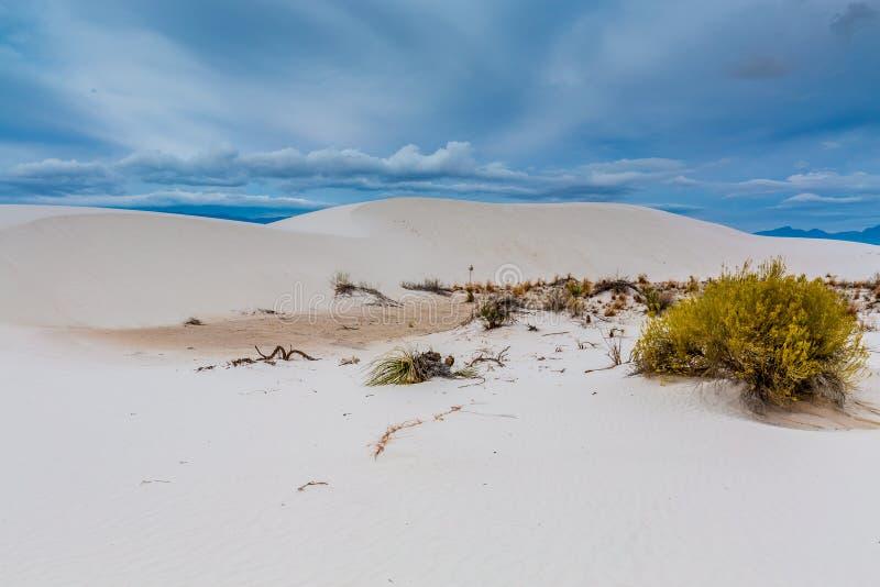 Οι άσπρες άμμοι εγκαταλείπουν τους αμμόλοφους του άσπρου εθνικού πάρκου μνημείων άμμων στοκ εικόνα με δικαίωμα ελεύθερης χρήσης