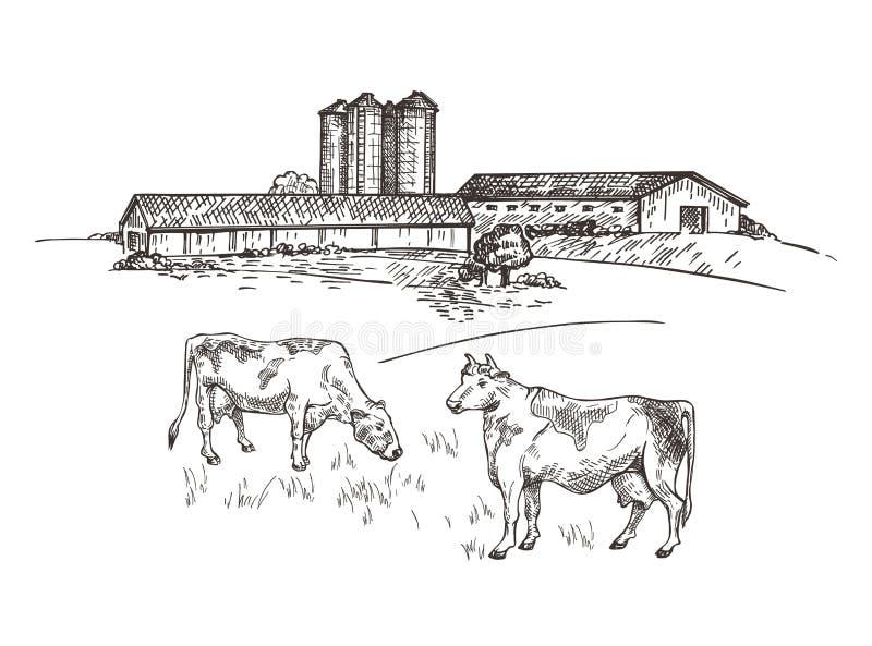 Οι αγελάδες βόσκουν κοντά στο αγρόκτημα Αγροτικό σκίτσο ύφους τοπίων Αναδρομική απεικόνιση απεικόνιση αποθεμάτων
