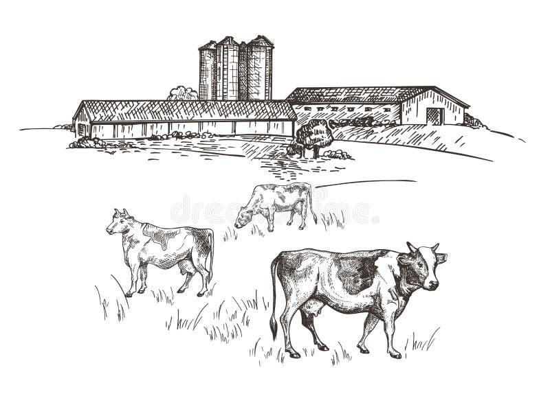 Οι αγελάδες βόσκουν κοντά στο αγρόκτημα Αγροτικό σκίτσο ύφους τοπίων Αναδρομική απεικόνιση διανυσματική απεικόνιση