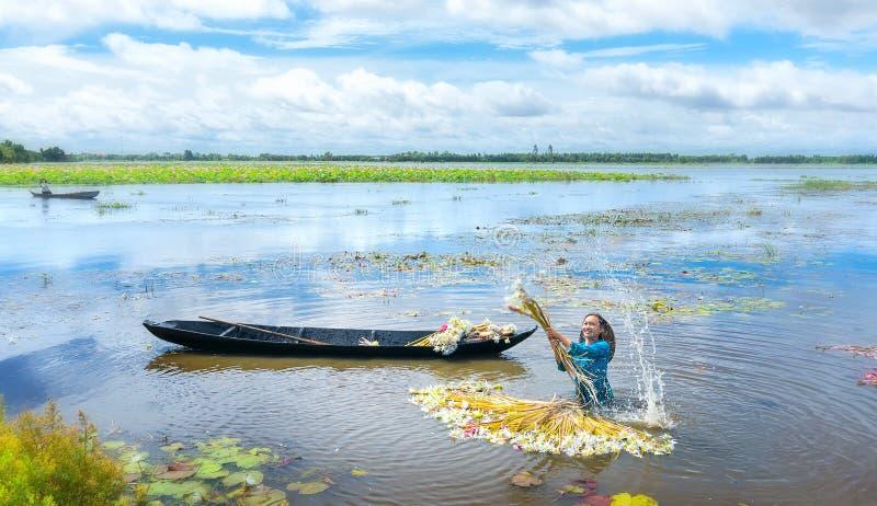 Οι αγρότες καθαρίζουν τους κρίνους μετά από τη συγκομιδή κάτω από τα έλη στην εποχή πλημμυρών στοκ φωτογραφία με δικαίωμα ελεύθερης χρήσης