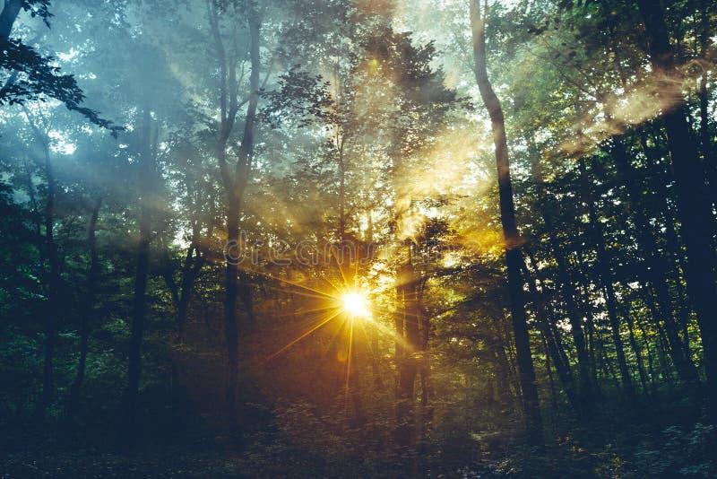 Οι ακτίνες φωτός του ήλιου πρωινού κάνουν τον τρόπο μέσω των φύλλων και Mi Threes στοκ εικόνα με δικαίωμα ελεύθερης χρήσης