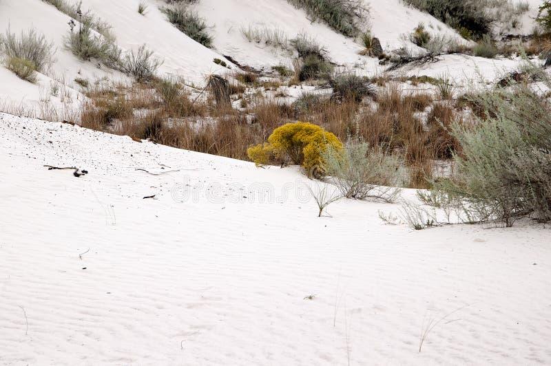 Οι αμμόλοφοι του άσπρου εθνικού μνημείου άμμων στο Νέο Μεξικό ΗΠΑ στοκ φωτογραφία με δικαίωμα ελεύθερης χρήσης
