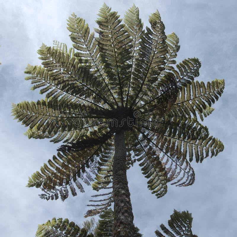 Οι απεργίες φτερών δέντρων με την τεράστια χαρασμένη ομπρέλα του στοκ εικόνα