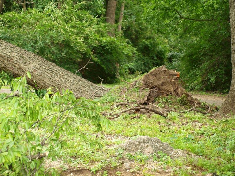 Οι απομονωμένες περιοχές του πάρκου θα είναι τελευταίες για να πάρουν καθαρισμένες στοκ φωτογραφία με δικαίωμα ελεύθερης χρήσης