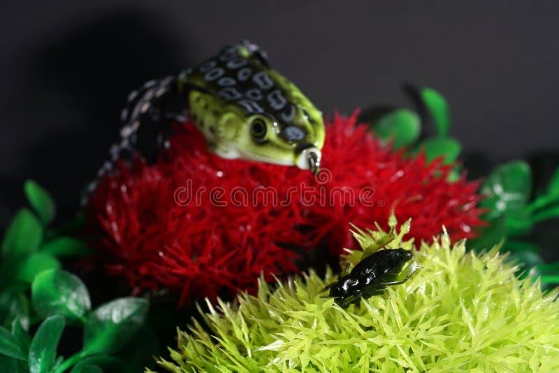 Οι βάτραχοι φιαγμένοι από πλαστικό με τους αιχμηρούς γάντζους είναι καλοταιριασμένοι στοκ εικόνες
