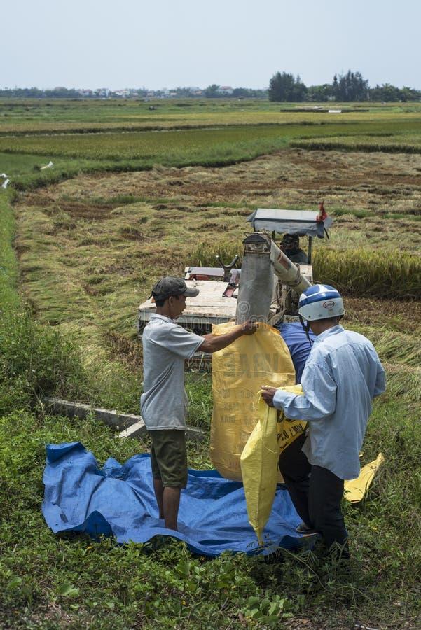 Οι βιετναμέζικοι αγρότες τοποθετούν το ρύζι επάνω από το α σε σάκκο συνδυάζουν τη θεριστική μηχανή στοκ φωτογραφία με δικαίωμα ελεύθερης χρήσης