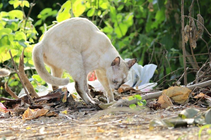 Οι γάτες ρίχνουν τα περιττώματα στον κήπο στοκ φωτογραφία