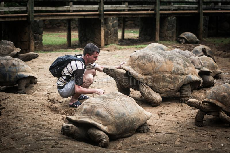 Οι γιγαντιαίες Σεϋχέλλες Πάρκο φύσης Λα Vanille Μαυρίκιος στοκ εικόνες με δικαίωμα ελεύθερης χρήσης