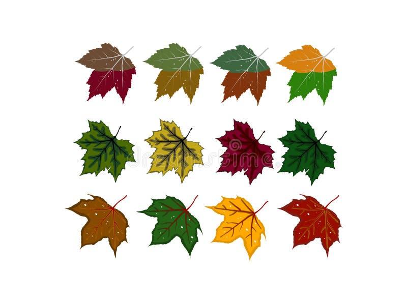 Οι διάφορα μορφές και τα χρώματα των φύλλων διανυσματική απεικόνιση