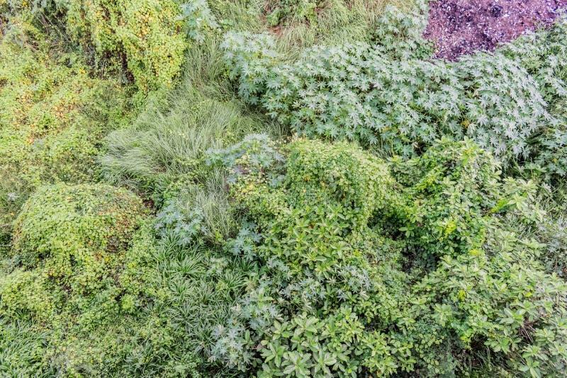 Οι διάφοροι τύποι θάμνων & Μπους κλείνουν την άποψη με τα φύλλα πρασινάδων μετά από τη βροχή που καταρρίπτεται στη περίοδο βροχών στοκ φωτογραφίες