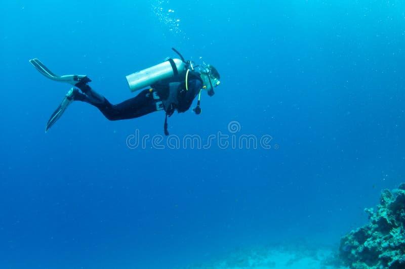 οι δύτες κοραλλιών πέρα από το σκάφανδρο σκοπέλων κολυμπούν στοκ φωτογραφία
