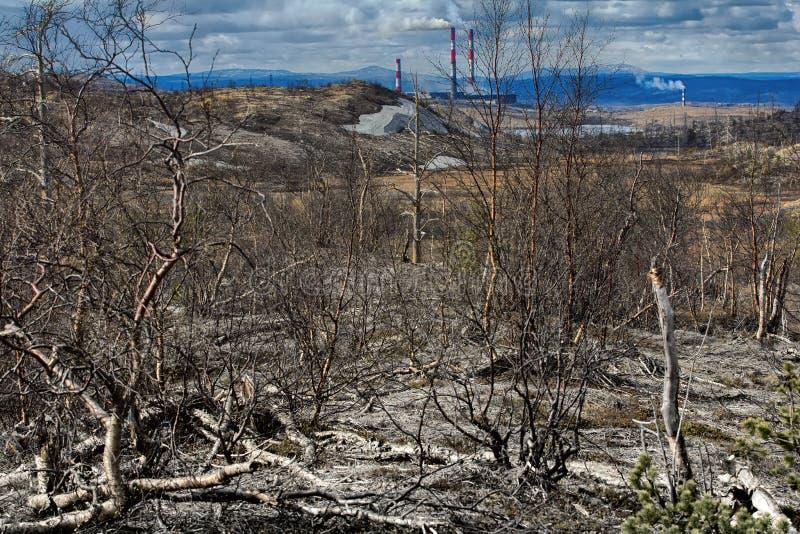 Οι εγκαταστάσεις του δασικός-tundra πέθαναν λόγω των εγκαταστάσεων λευκόχρυσος-νικελίου ατμοσφαιρικής ρύπανσης στοκ φωτογραφία
