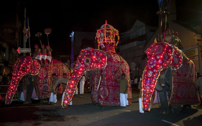 Οι εθιμοτυπικοί ελέφαντες παρελαύνουν μέσω των οδών Kandy κατά τη διάρκεια του Esala Perahera στη Σρι Λάνκα στοκ φωτογραφίες