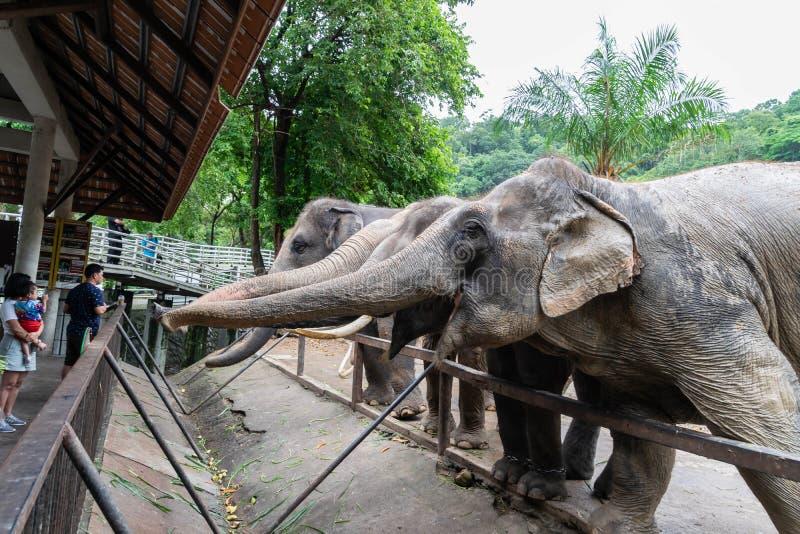 Οι ελέφαντες ζητούν τα τρόφιμα από τους τουρίστες στοκ εικόνες με δικαίωμα ελεύθερης χρήσης