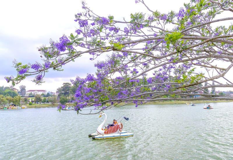Οι επισκέπτες απολαμβάνουν την άνθιση λουλουδιών Jacaranda κατά μήκος της λίμνης Xuan Huong στοκ εικόνες