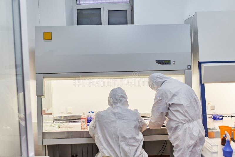 Οι εργασίες γιατρών στο εργαστήριο Ο επιστήμονας πραγματοποιεί την έρευνα στοκ εικόνα με δικαίωμα ελεύθερης χρήσης