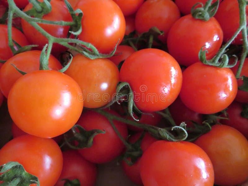 Οι εύγευστες ντομάτες με ένα αγαθό κοιτάζουν και απίστευτο χρώμα στοκ εικόνες