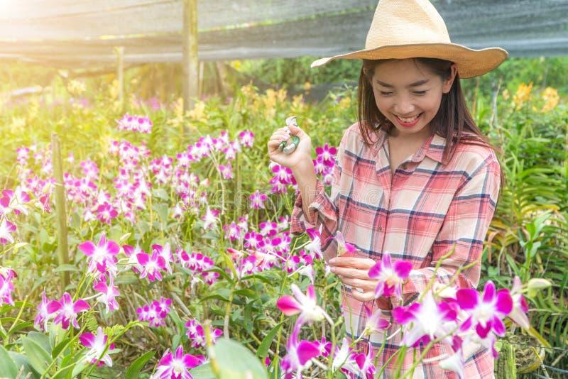 Οι θηλυκοί κηπουροί φορούν ένα πουκάμισο καρό και φορούν ένα καπέλο Χέρια που κρατούν το ψαλίδι για τις τέμνουσες ορχιδέες στοκ εικόνα