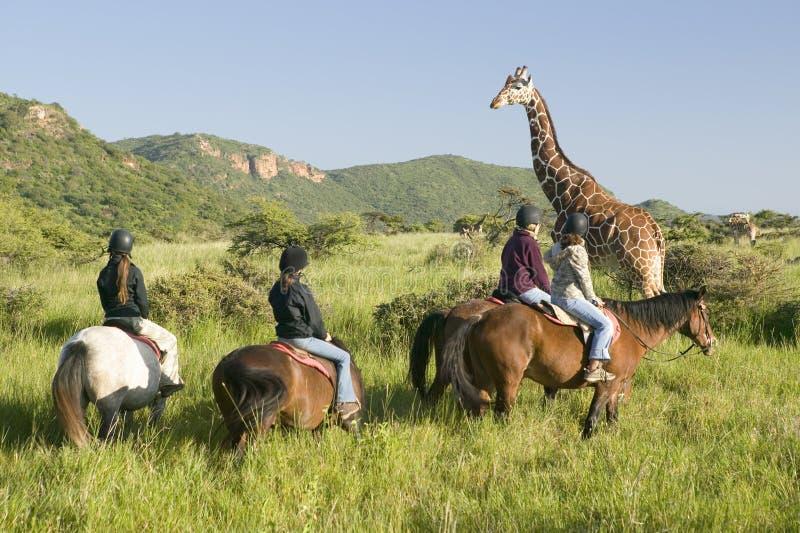 Οι θηλυκοί αναβάτες πλατών αλόγου οδηγούν τα άλογα το πρωί κοντά Giraffe Masai στη συντήρηση άγριας φύσης Lewa στη βόρεια Κένυα,  στοκ φωτογραφίες