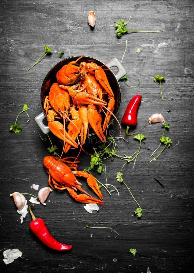 Οι λιχουδιές τροφίμων Βρασμένοι αστακοί με τα χορτάρια και τα πικάντικα πιπέρια στοκ φωτογραφία