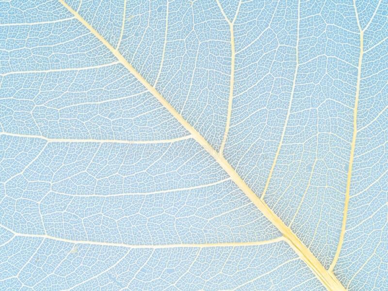οι κίτρινες φλέβες του ξηρού φύλλου κλείνουν επάνω στο μπλε στοκ φωτογραφία με δικαίωμα ελεύθερης χρήσης