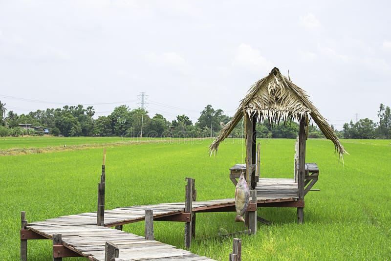 Οι καλύβες που στηρίζονται από τα ξύλινα και ξηρά φύλλα με μια ξύλινη γέφυρα στους τομείς ρυζιού στοκ εικόνες