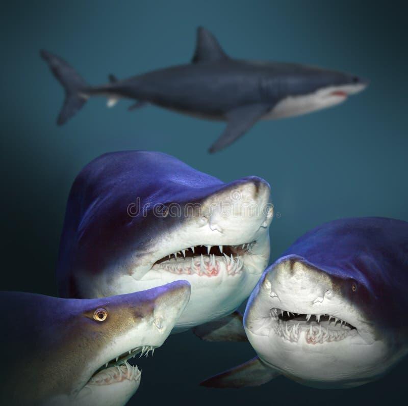 Οι καρχαρίες στοκ εικόνες με δικαίωμα ελεύθερης χρήσης