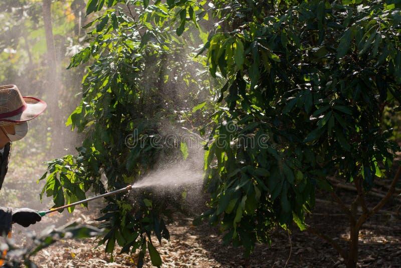 Οι κηπουροί ψεκάζουν τα εντομοκτόνα Farmer στοκ φωτογραφίες με δικαίωμα ελεύθερης χρήσης