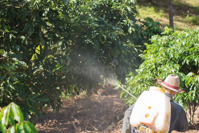 Οι κηπουροί ψεκάζουν τα εντομοκτόνα Farmer στοκ εικόνες