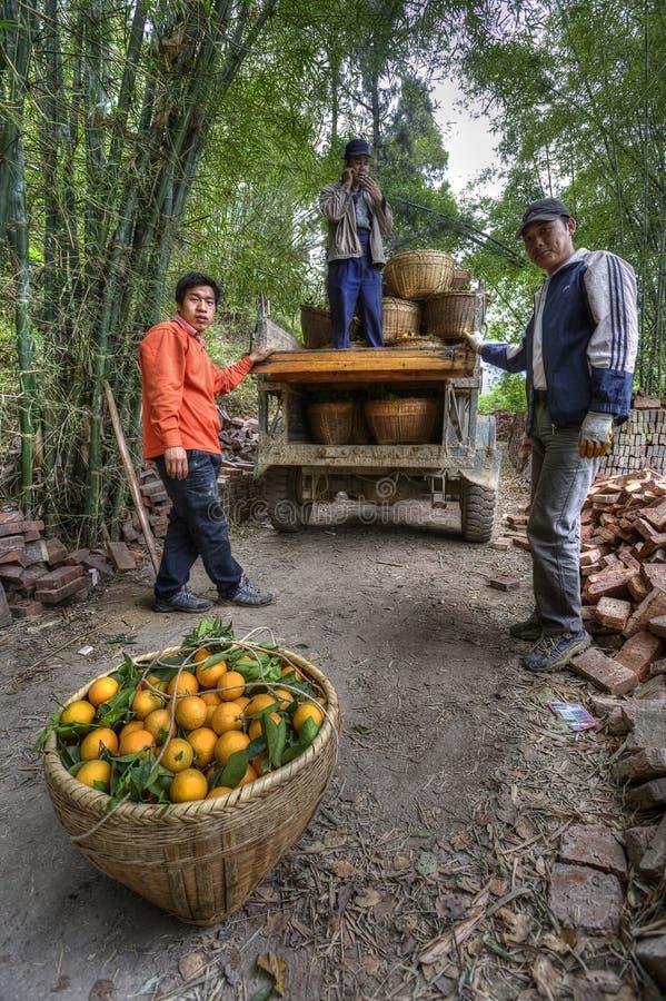 Οι κινεζικοί αγρότες ξεφορτώνουν τα καλάθια των πορτοκαλιών από ένα παλαιό φορτηγό στοκ εικόνες με δικαίωμα ελεύθερης χρήσης