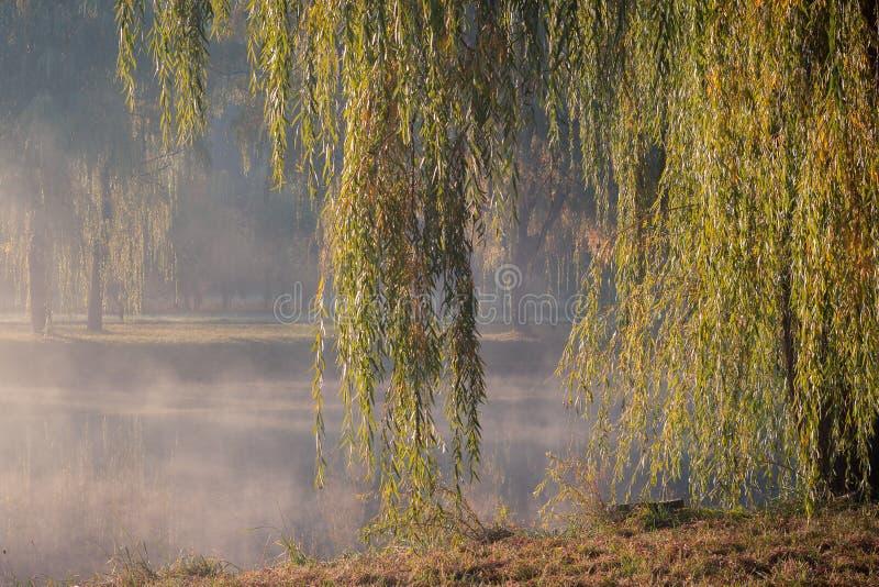 Οι κλάδοι ιτιών κλάματος κρεμούν κάτω από πέρα από το νερό στις όχθεις του ποταμού στο πάρκο πόλεων φθινοπώρου στα πλαίσια στοκ φωτογραφίες με δικαίωμα ελεύθερης χρήσης