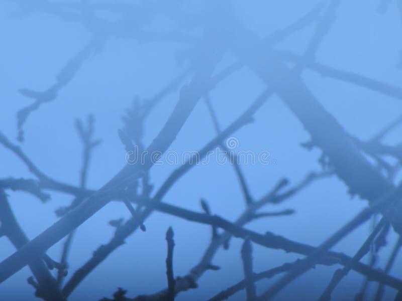 Οι κλάδοι στον ουρανό στοκ φωτογραφίες με δικαίωμα ελεύθερης χρήσης