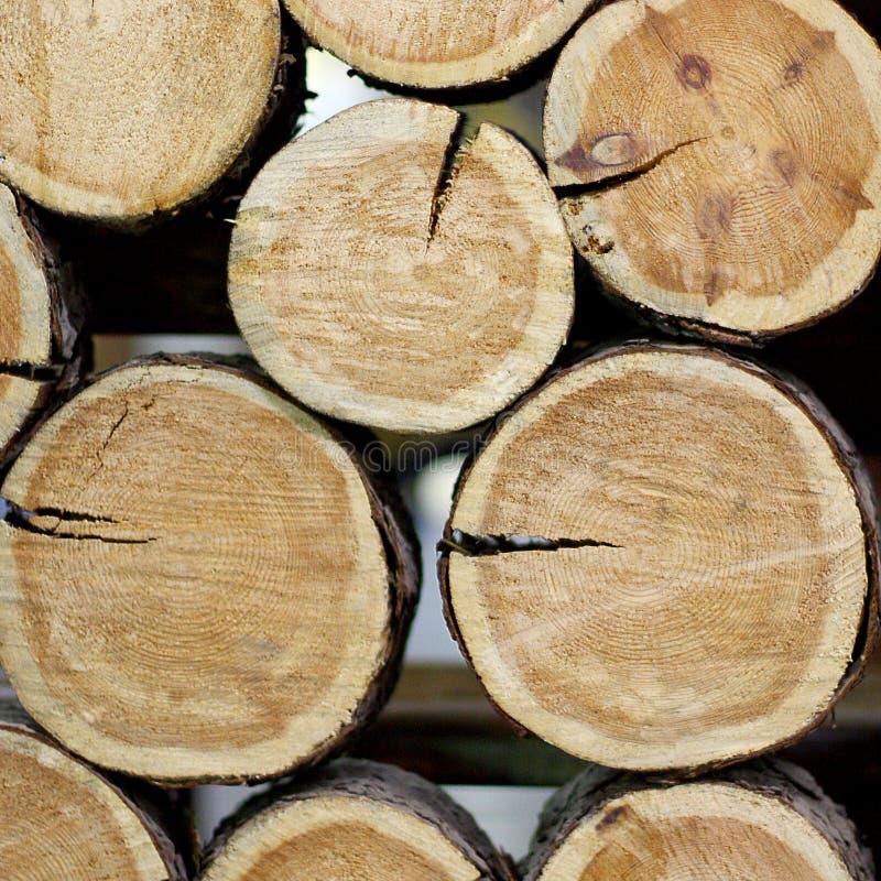 Οι κορμοί των δέντρων είναι διπλωμένοι όπως ένα χώρισμα στοκ εικόνα με δικαίωμα ελεύθερης χρήσης