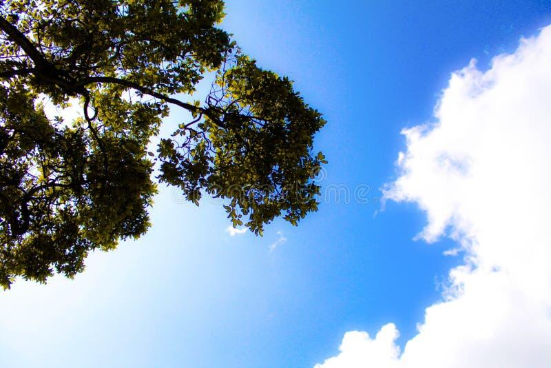Οι κλάδοι και το σύννεφο στοκ εικόνα με δικαίωμα ελεύθερης χρήσης