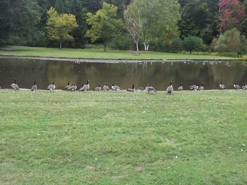 Οι λίμνες των πουλιών στοκ φωτογραφία