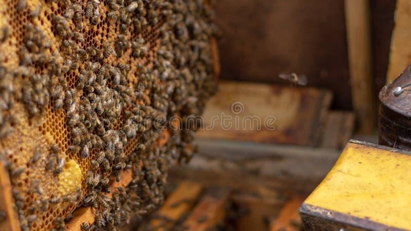 Οι μέλισσες εργάζονται σε μια ανοικτή κυψέλη, η οποία εξυπηρετεί έναν μελισσοκόμο στοκ φωτογραφίες με δικαίωμα ελεύθερης χρήσης