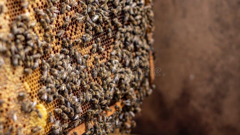 Οι μέλισσες εργάζονται σε μια ανοικτή κυψέλη, η οποία εξυπηρετεί έναν μελισσοκόμο στοκ εικόνες με δικαίωμα ελεύθερης χρήσης