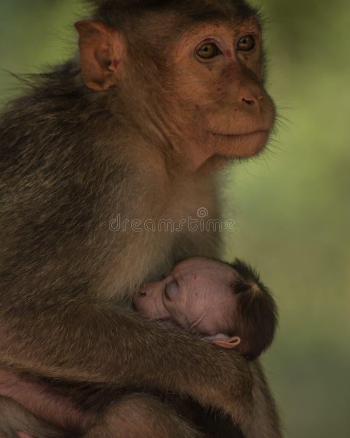 Οι μητέρες αγαπούν στοκ εικόνες