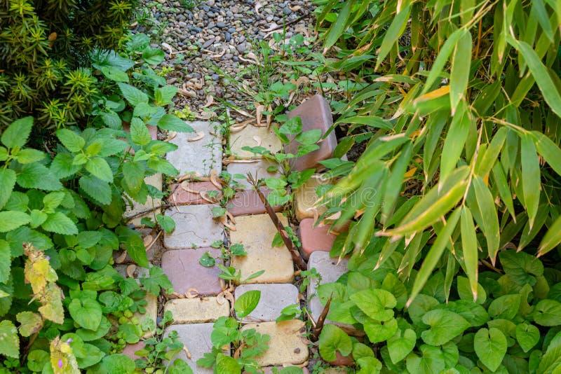 Οι νέοι βλαστοί aureosulcata Phyllostachys μπαμπού καταστρέφουν την πορεία κήπων πετρών στο διακοσμητικό κήπο στοκ εικόνα