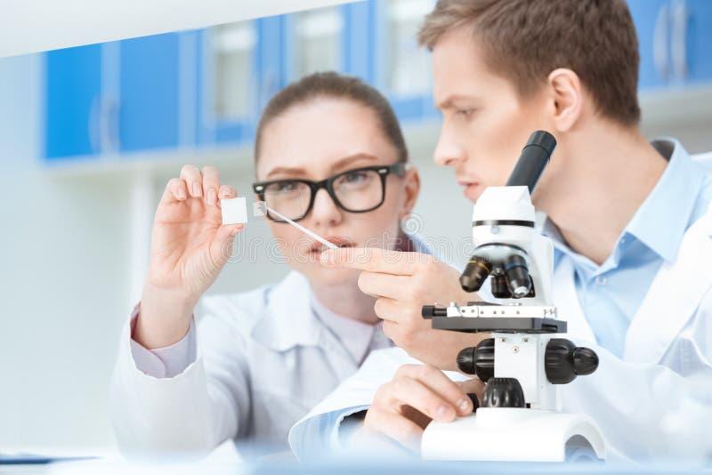 Οι νέοι φαρμακοποιοί που εργάζονται με το μικροσκόπιο γυαλιού γλιστρούν μέσα το εργαστήριο στοκ φωτογραφίες