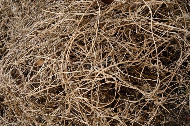 Οι ξηρές καφετιές άμπελοι είναι ομοιόμορφα κατασκευασμένες που συνδυάζονται στο έδαφος στοκ εικόνα με δικαίωμα ελεύθερης χρήσης